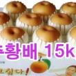 추황배 선물세트15kg (~17과)